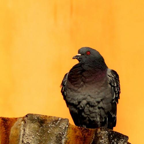 Place aux Aires Pigeon, Grasse, France