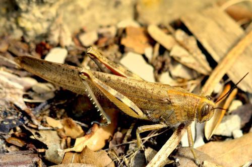 Villa Ndio Grasshopper