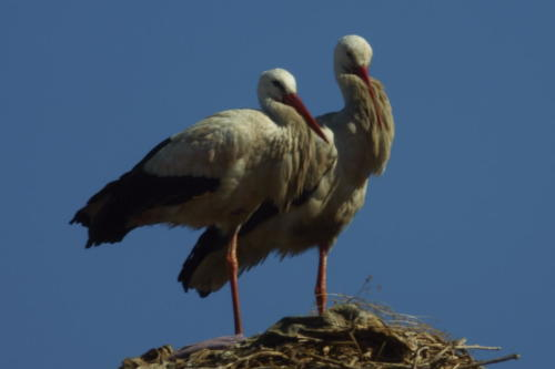 The Storks at Badii Palace