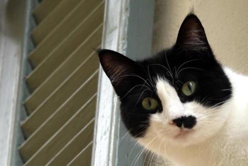 Mouans Sartoux Cat